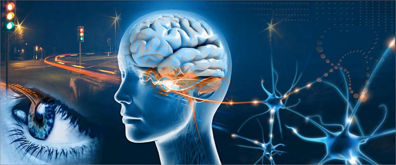 eye-brain-photo-neuropsych-workshop1