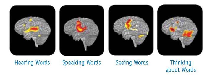 thinking-brain_75837_31